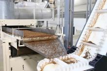 В Республике Карелия открылся новый завод по производству рыбных кормов