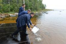 Илья Шестаков, Денис Беляев и Александр Кержаков выпустили 4 000 экземпляров палии в Ладожское озеро