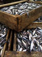 В ходе рыбоохранного рейда в Республике Коми изъято более 3 тысяч кг водных биоресурсов