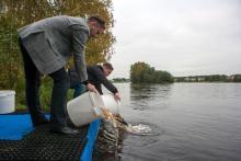 Денис Беляев и Александр Кержаков выпустили 2000 экземпляров лосося в реку Шуя Республики Карелия