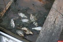 Полкилометра сетей изъято инспекторами рыбоохраны у браконьеров на Ильмене