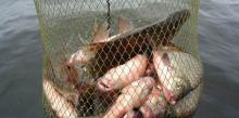 Браконьеров на Ладоге поймали со 100 кг незаконно добытого леща
