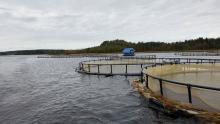 В Северо-Западном теруправлении Росрыболовства проведен аукцион на пользование рыбоводными участками в Республике Карелия