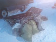 Более 40 браконьерских сетей изъято на озере Азатское Вологодской области