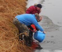 В реку Кубена Вологодской области выпустили 2 307 сеголеток нельмы