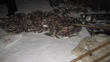 На Белом озере задержали браконьеров, выловивших рыбы почти на 1,2 млн. рублей