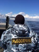 Псковская рыбоохрана за неделю оштрафовала нарушителей на 21 тысячу рублей