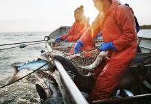 На 28 сентября российские рыбаки добыли 3,8 млн тонн биоресурсов