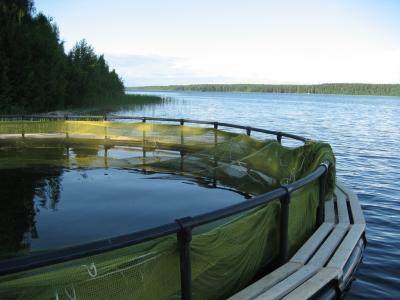 В Северо-Западном теруправлении Росрыболовства разыграли два рыбоводных участка в Псковской области
