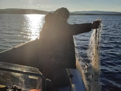 Инспекторами рыбоохраны по Республике Карелия в ходе рыбоохранных мероприятий на озере Пяозеро изъяты незаконные сетные орудия лова и моторная лодка