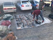 Браконьер из Псковской области попал  в сети закона