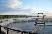 В Северо-Западном теруправлении Росрыболовства разыграли 3 рыбоводных участка, расположенных в Ленинградской области