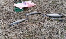 В Карелии браконьеры нанесли ущерб водным биоресурсам почти на 110 тысяч рублей