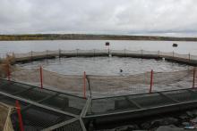 В Северо-Западном теруправлении Росрыболовства разыграли рыбоводный участок в Вологодской области