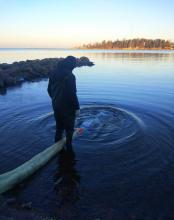 Ладожское озеро пополнилось запасами палии
