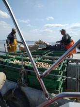 Северо-Западное территориальное управление Росрыболовства в рамках осуществления функций по государственному надзору за торговым мореплаванием в 2020 году провело 17 рейдов