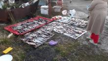 Должностными лицами отдела рыбоохраны по Республике Карелия и ОМОН Управления Росгвардии по Республике Карелия выявлены факты незаконной добычи водных биоресурсов