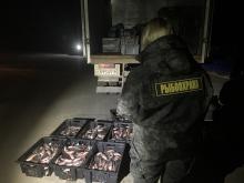 Сотрудниками рыбоохраны пресечены нарушения правил рыболовства на водных объектах Псковской области