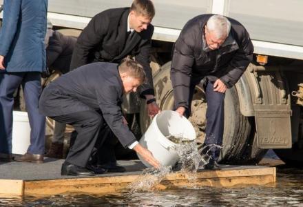 Георгий Полтавченко, Вячеслав Макаров и Денис Беляев выпустили молодь балтийского сига в Финский залив
