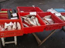 В Великом Новгороде опять ловили нелегальных торговцев рыбой