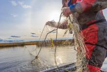 В реестр орудий лова в Коми внесено восемь жаберных сетей