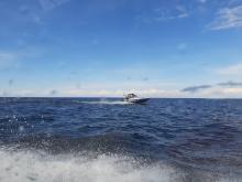 Сотрудники рыбоохраны Санкт-Петербурга и Ленобласти выявили более 250 нарушений с начала года