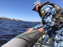 Псковская область присоединилась к экологической акции «Всероссийский день без сетей»
