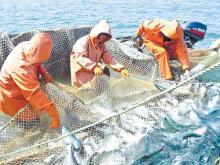 К 22 июня российские рыбаки добыли около 2,5 млн тонн водных биоресурсов – на 8,4% больше уровня 2019 года
