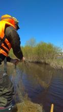 Более 40 орудий лова изъяла рыбоохрана у браконьеров в Псковской области за неделю