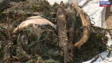 Псковская Рыбоохрана изъяла 260 орудий лова и 5 водных транспортных средств